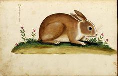 LOADS of FREE Printables on this site!  Animal - Woodland - Rabbit - Italian (2)