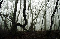 Groază și mister. Un grup de prieteni pierduți în pădure! - http://tuku.ro/groaza-si-mister-un-grup-de-prieteni-pierduti-in-padure/