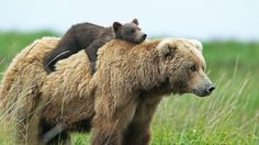 """civhear: awwdorables: """"are we there yet"""" """"are we there yet"""" """"are we there yet"""" """"TIMMY, FOR THE LOVE OF GOD I WILL TURN AROUND AND WE'LL FORGET ABOUT BEAR DISNEYLAND"""" YES"""