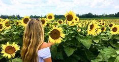 You've Got To Visit This Massive Sunflower Field In Ontario This Summer featured image Sunflower Fields, Yellow Sunflower, Yellow Flowers, Beginning Of Spring, Bright Yellow, Fun Activities, Ontario, Beautiful Flowers, Seeds
