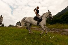 Reitschule, Pferde, Wiesen, Flur, Ausritte, Hengst, Pferdehzucht