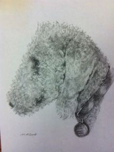 """Bedlington terrier """"Brodie"""" pencil drawing by M.A. Zoma"""