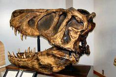 T-rex-large.jpg (600×400)