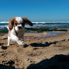 Mr Sven on the beach for the first time ♥