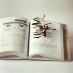 Aceite de oliva, cultura, salud y sabiduría. Olive Oil, culture, health and wisdom