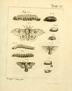 T.1 - Versuch einer vollständigen Geschichte vorzüglicher Holzarten - Biodiversity Heritage Library
