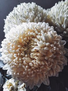lauragoodall:  Bedside flower study