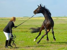 Working with a difficult horse