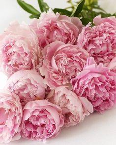 #peonies #pinkpeonies