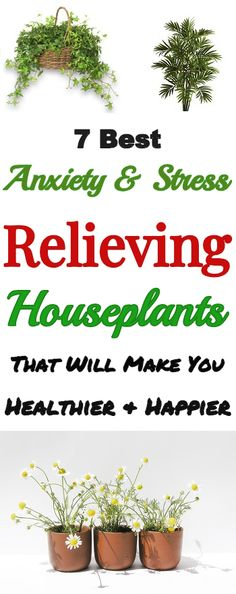 Anxiety & Stress Relieving Houseplants #anxiety #stress #stressrelief #houseplant #plants