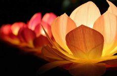 Lanterns during the Lotus Lantern Festival in Korea