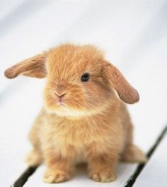 Technically.... I'm a bunny rabbit