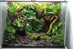 Terrascaping (poison dart frog vivarium) created by TOO from Denmark (click for more photos) / UK Aquatic Plant Society forum