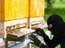 Farm Crime: To Catch a Bee Rustler - Modern Farmer