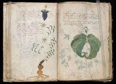 Voynich Manuscript: a Hoax or the Planet's Strangest Manuscript?