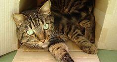 Déménager avec son chat : 5 conseils pour l'aider et le rassurer Son Chat, Photo Chat, Catus, Diy Stuffed Animals, Dogs, Moment, Aquarium, Travel, Education