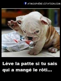 humour-chien-e1409191191678.jpg (450×600)