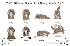 Bunny Behaviors