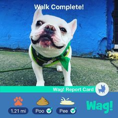 Arrange dog walking, overnight care, in-home training, and vet advice! Wag Dog Walking, Animal Pictures, Cute Pictures, Shelter, Terrier, Dog Memes, New Puppy, Diy Stuffed Animals, Dog Grooming