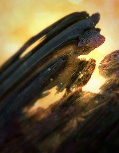 Mandeloculars by Chaotic Atmospheres , via Behance
