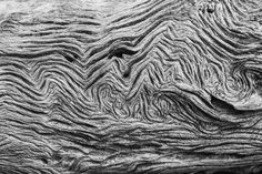 Jekyll Island Driftwood Texture 02, 2012, black and white photograph by Keith Dotson