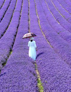 A lavender stroller