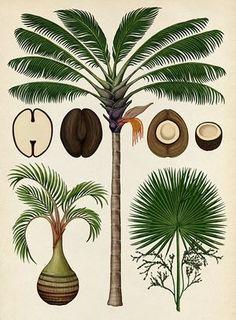 Botanicum - Palms