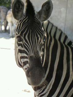 Zoo Besuch in Duisburg