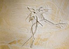 Archaeopteryx Goes for an X-ray