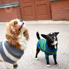 The Dog Pullover When you're trying to act cool around your crush Dog Sweaters, Your Crush, Boston Terrier, Cool Stuff, Dogs, Animals, Seasons, Heroes, Cool Things