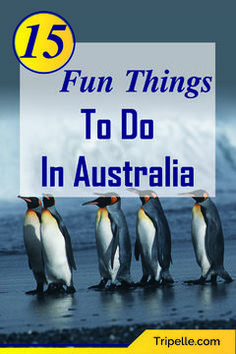 Unique things to do in Australia with family for fun vacation. Australia is huge and theres a million things you can do but weve narrowed to 15 best things you can do while visiting Australia with kids on an Australian family vacation. #Australiatravels #thingstodoinSyndey #Australiavacation #Australiatrip #Australiabucketlist #Australiatravelbeautifulplaces #SydneyAustralia #SyndeyAustraliaThingtodo