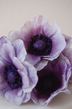 purple sugar flowers by Maggie Austin Cake