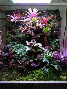 Gecko Terrarium, Reptile Terrarium, Moss Terrarium, Terrarium Plants, Orchid Terrarium, Planted Aquarium, Tropical Garden, Tropical Plants, Crested Gecko Habitat
