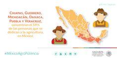 Chiapas, Guerrero, Michoacán, Oaxaca, Puebla y Veracruz, concentran el 58.7% de los trabajadores agrícolas del país. SAGARPA SAGARPAMX #MéxicoAgroPotencia