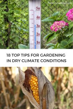 18 sustainable, practical strategies for growing food and gardening in dry climate conditions. These ideas are easy to apply and can help your plants thrive with simple tips & good design. Sustainable Gardening, Organic Gardening, Self Watering, Plant Needs, Edible Garden, Garden Supplies, Garden Tips, Compost, Container Gardening