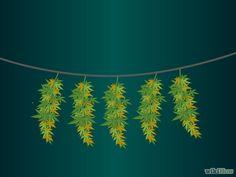 Como Cultivar Maconha Medicinal: 13 Passos (com Imagens)