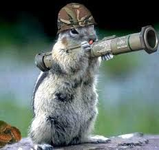 PsBattle: Squirrel with a bazooka Squirrel Pictures, Funny Animal Pictures, Funny Photos, Baby Animals, Funny Animals, Cute Animals, Cute Squirrel, Squirrels, Animal Jokes