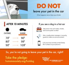 Never leave your pet in the car, not even for a second! Spread the word, you may save a life!