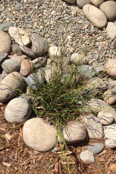 Top Raman Plant? :-)