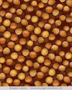 sucupira seeds pattern | © wagner campelo