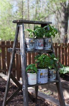Recycled herb planters and an upcycled wooden ladder garden display ...