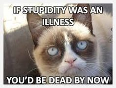 Image result for grumpy cat quotes