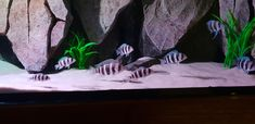 Custom made aquarium Custom Aquariums