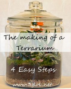 The Making of a Terrarium - 4 EASY Steps. Easier than you think. My cats aren't getting in this plant. http://www.3glol.net