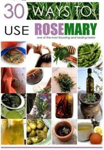 Extraordinary Uses for Rosemary. For healthy living, learn simple uses for rosemary herbs. Rosemary has multiple properties and benefits, variously used since ancient times until today.