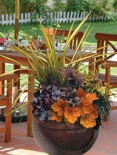 Fall container with Phormium 'Yellow Wave', Abelia 'Kaleidoscope,' black mondo grass, Heuchera 'Obsidian,' Begonia 'Benitochiba,' Heuchera 'Southern Comfort' and Heuchera 'Obsidian.'