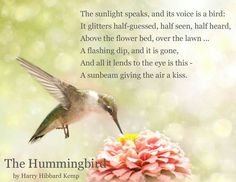 Discover and share Hummingbird Quotes And Sayings. Explore our collection of motivational and famous quotes by authors you know and love.