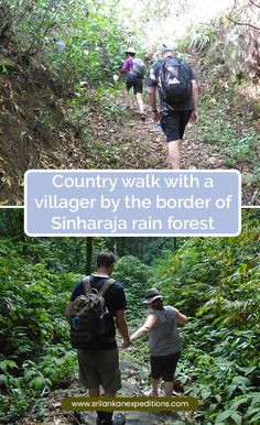 We offer Trekking to Sinharaja Rain Forest - Country walk with a villager - Sinharaja Rain Forest Trekking - Trek to Sinharaja - Trekking Trips in Sri Lanka. Country Walk, Sri Lanka, Trekking, Trips, Rain, Walking, Viajes, Rain Fall, Traveling
