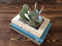 Stacked Vintage Book Planter for Succulents or por PaperDame