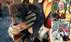 Baby bear nicknamed Smokey Junior is saved from Florida brush fire